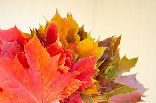 Autumn, Maple, Leaves, Fall, Dry Leaves, Fallen Leaves
