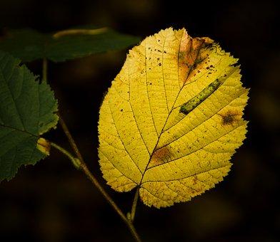 Leaf, Plant, Fall, Autumn, Yellow Leaf, Branch, Tree