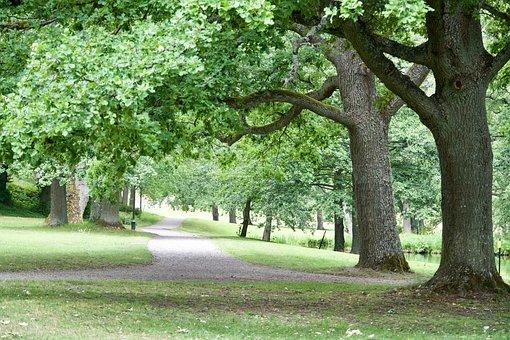 Park, Trees, Path, Landscape, Nature, Field, Road