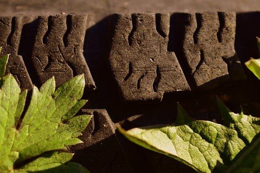 Leaves, Botany, Foliage, Nature, Macro