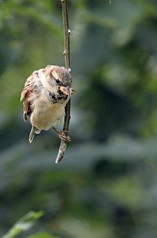 Sparrow, Bird, Perched, Animal, Feathers, Plumage, Beak