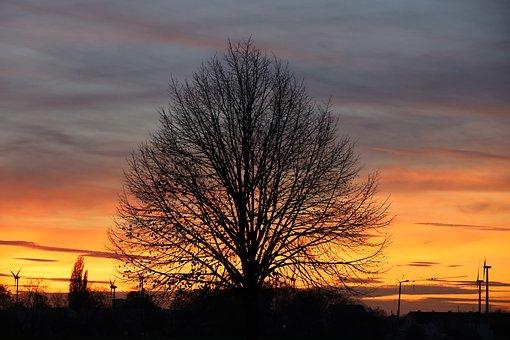 Sunset, Tree, Sky, Silhouette, Clouds, Sunrise, Evening
