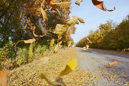 Autumn, Road, Landscape, Leaves, Foliage