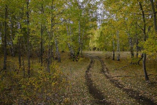 Road, Trees, Forest, Nature, Landscape