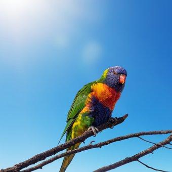 Parrot, Bird, Perched, Animal, Feathers, Plumage, Beak