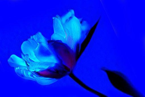 Art, Tulip, Blue, Flower, Spring, Plant, Flowers, Flora