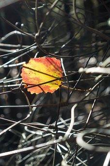 Leaf, Alder, Colorful, Yellow, Orange, Autumn, Light