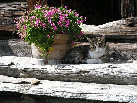 Cat, Flowers, Wood, Domestic Cat, Flower Boxes, Farm