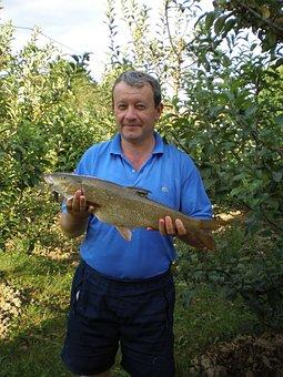 Fish, Caught, Barbel, Large