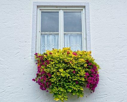 Window, Flowers, Flower Box, Facade, Plant, Flower