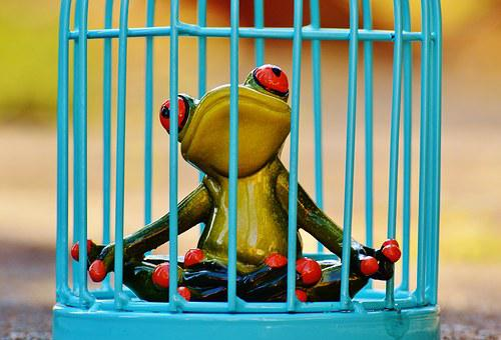 Frog, Cage, Imprisoned, Sad, Figure, Funny, Cute