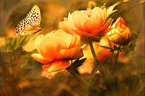 Butterfly, Nature, Flowers, Image Editing, Orange