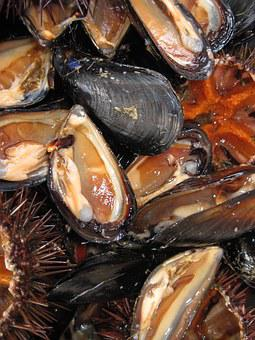 Mussels, Seafood, Edible, Starter, Fresh