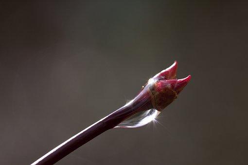 Spring, Branch, Raindrop, Tree, Flora, Drip, Maple