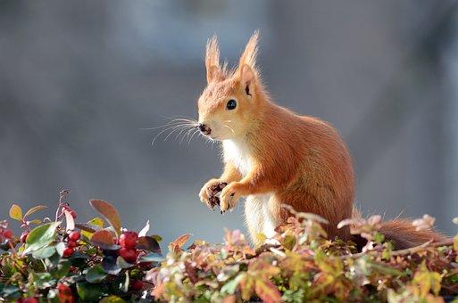 Squirrel, Digging, Earth, Balcony Box, Flower Box