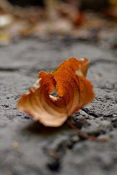 Autumn, Leaf, Macro