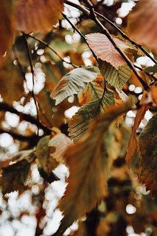 Foliage, Leaves, Autumn, Flora, Nature