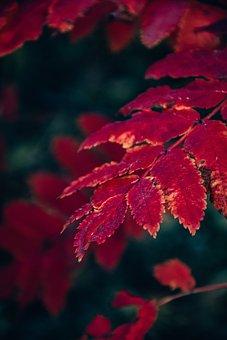 Foliage, Autumn, Trees, Leaves, Flora, Nature