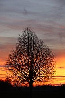 Tree, Sunset, Nature, Dusk, Sky, Sun, Clouds, Field