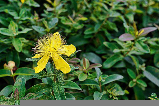 Flower, Yellow Flower, Garden, Yellow Petals, Petals