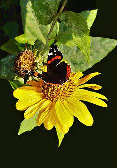 Butterfly, Flower, Pollinate, Pollination, Insect