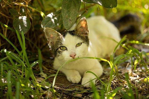 Cat, Kitten, Pet, Feline, Animal, Fur, Kitty, Whiskers