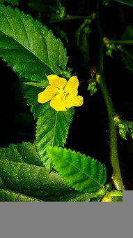 Flower, Garden, Yellow Flower, Leaves, Petals