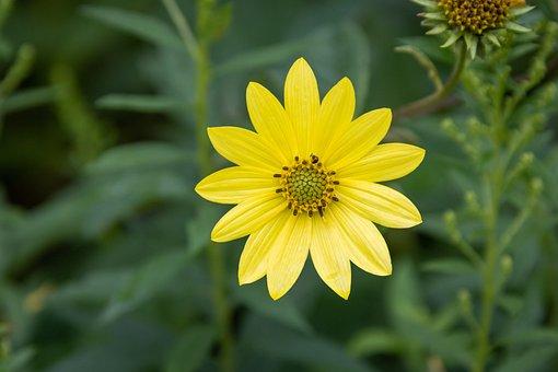Flower, Yellow Flower, Bloom, Blossom, Petals