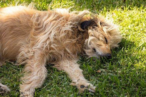Dog, Pet, Canine, Animal, Sleeping, Lying, Fur, Snout