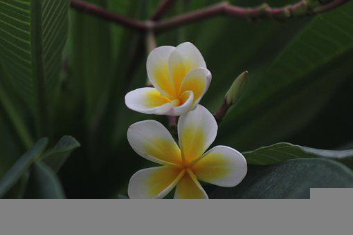 Flower, Bloom, Botany, Blossom, Nature, Petals, Flora