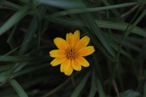 Flower, Bloom, Botany, Petals, Nature, Blossom, Flora