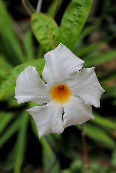 Flower, Bloom, Botany, Blossom, Nature