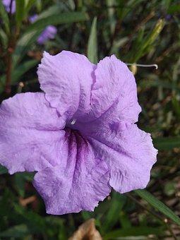 Flower, Petals, Bloom, Blossom, Garden