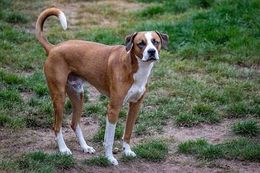 Dog, Canine, Domestic, Pet, Mammal, Cute