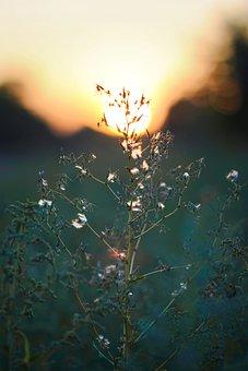 Wildflowers, Meadow, Sunset, Flowers, Flora, Landscape
