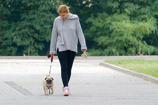 Person, Young, Girl, Dog, Pet, Walking, Animal, Leashed
