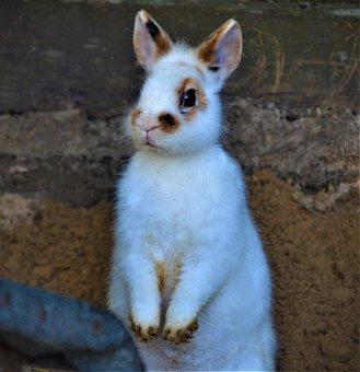 Rabbit, Bunny, Animal, Pet, Captivity, Nature, Fauna