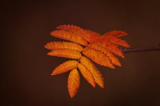 Leaves, Botany, Autumn, Foliage, Macro