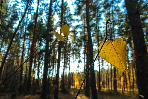 Leaf, Branch, Fall, Autumn, Twig, Forest, Yellow Leaf