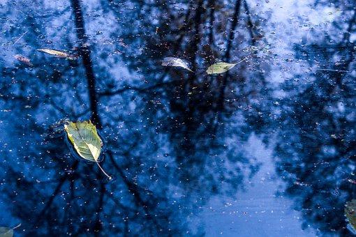 Puddle, Leaves, Fall, Autumn, Foliage, Reflection