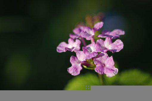 Flowers, Purple Flowers, Petals