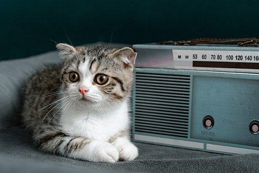 Animal, Kitten, Pet, Cat, Radio, Feline