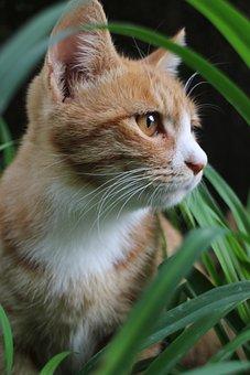 Animal, Cat, Feline, Pet, Mammal, Grass, Sitting