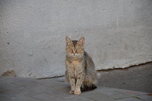 Cat, Stray Cat, Street Cat, Pet, Feline, Animal