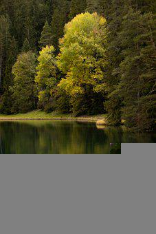 Lake, Forest, Nature, Tranquil