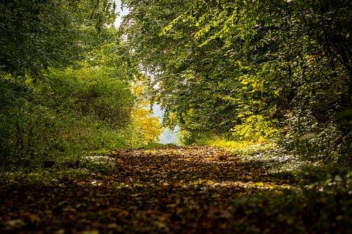 Forest, Path, Landscape, Nature, Trees