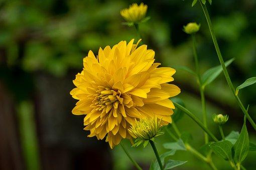 Yellow Flower, Garden, Nature, Botany, Meadow, Macro