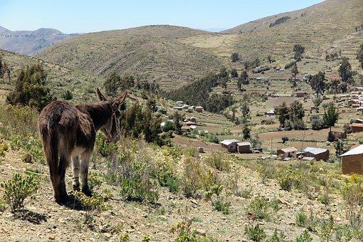 Donkey, Chisi, Landscape, Agriculture, Bolivia, Rural