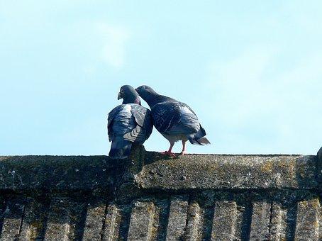 Pigeons, Doves, Sky, Bird, Animal, Symbol, Kisses
