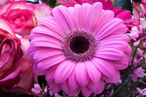 Gerbera, Composites, Roses, Broom, Genista, Flowers